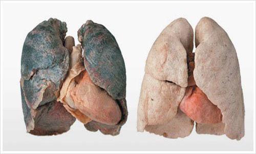 Курение и бодибилдинг: как влияет, при занятиях