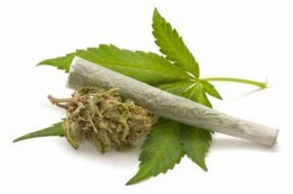 Анаша: вред, последствия курения, план, как влияет на организм