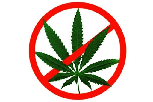Сколько держится марихуана в моче: как вывести, анализ