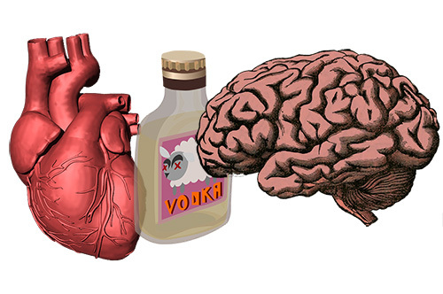 Хофитол и алкоголь: совместимость, через сколько можно, последствия