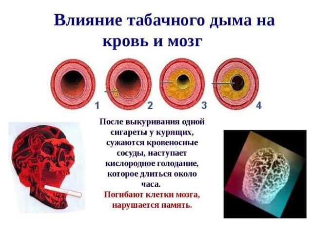 Влияние курения на органы дыхания: сердечно-сосудистую систему, дыхательную