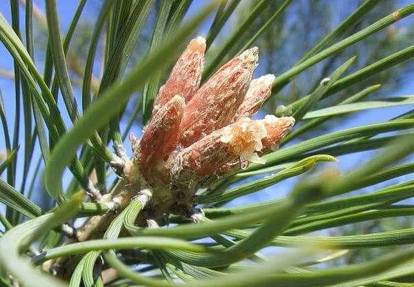 Коричневая мокрота: коричневого цвета, при кашле, с вкраплениями