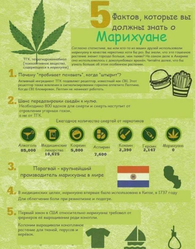 Вред марихуаны: курение, влияние на беременность