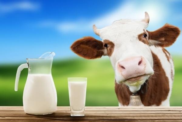 Кальян на молоке: как делать, курение, молочный