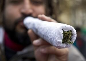 Вред конопли: от курения: какой, есть ли, на организм