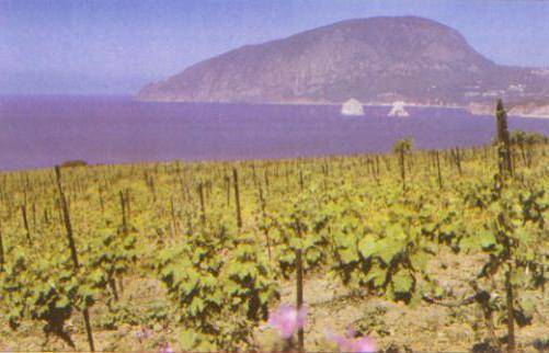 Вино Мускат белый Красного камня, Массандра: крымское, вкусы